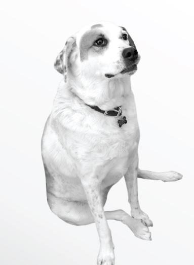 Spot The Marketing Dog